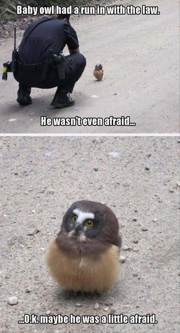 Baby owl had a run in with the law. He wasn't even afraid… Ok… Maybe he was a little afraid.