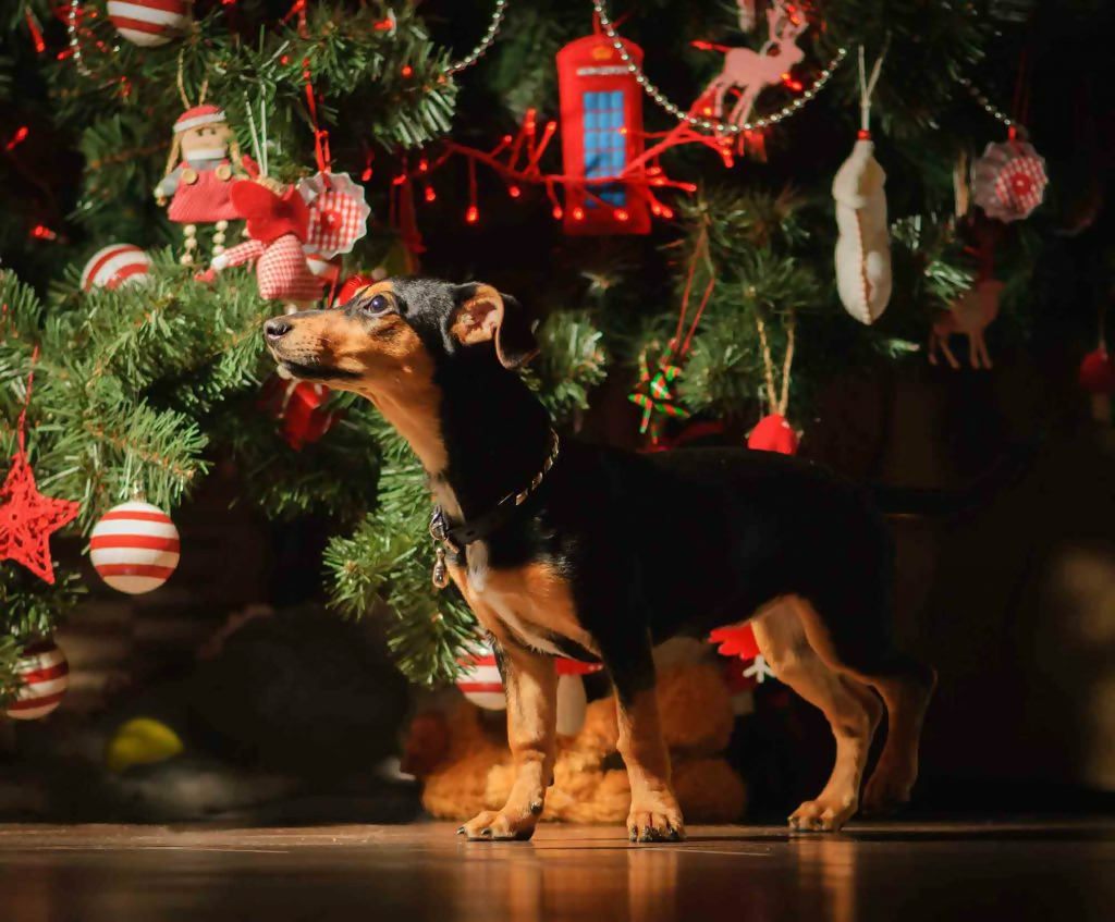 Choose The Right Height For A Pet-Friendly Christmas Tree