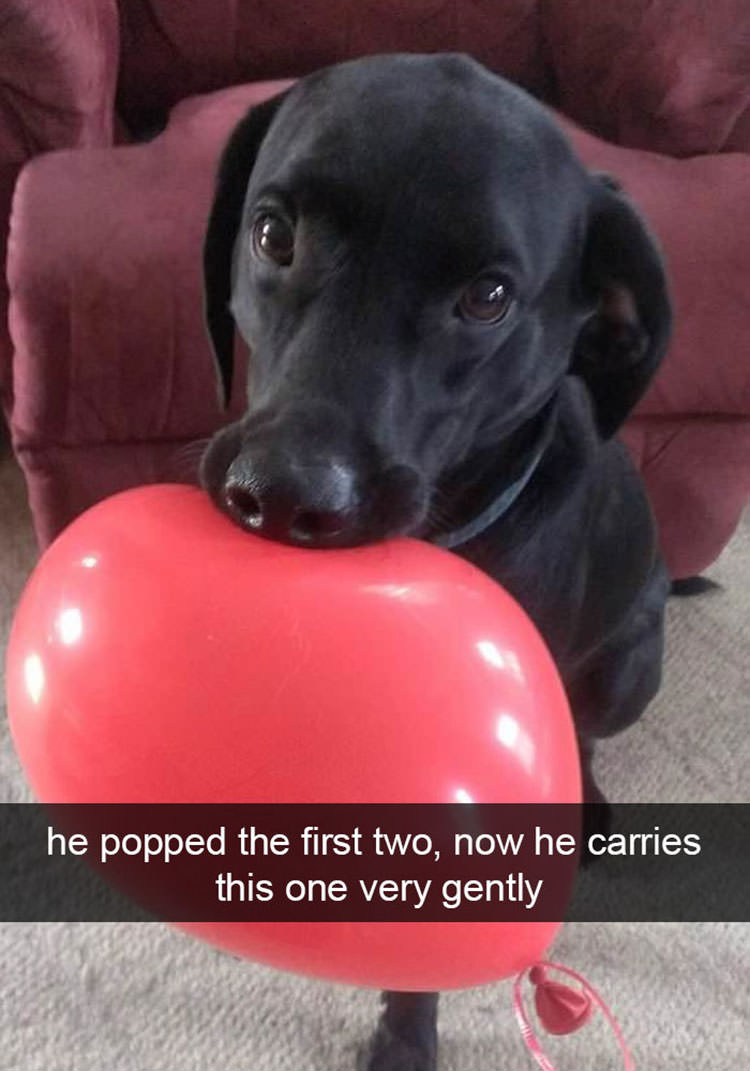 He popped the first two, now he carries this one very gently