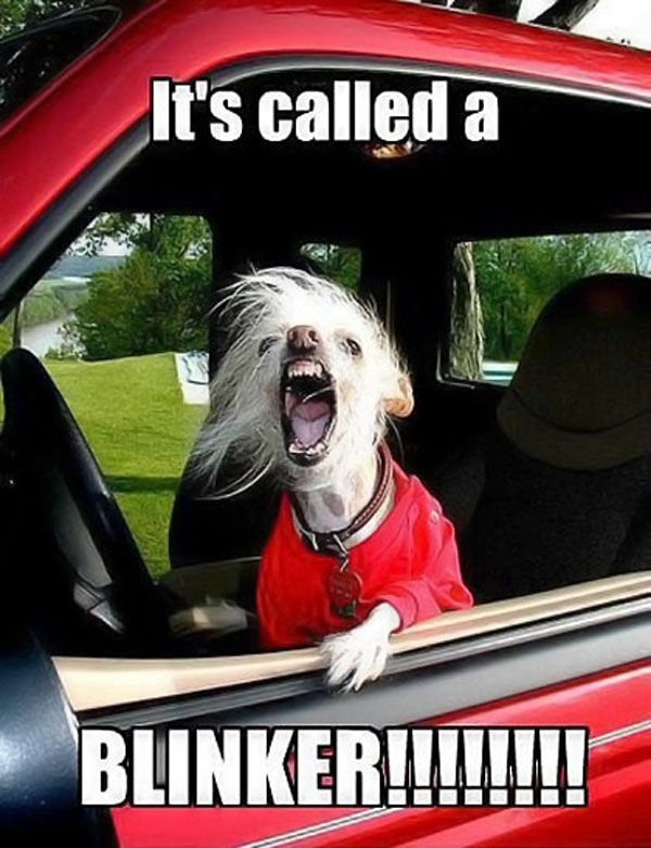 It's called a BLINKER!!!!!!