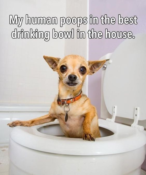 My human pops in the best drinking bowl in the house.