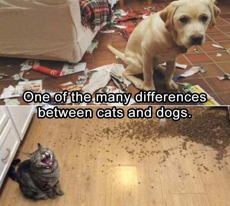 One of the many differences between cats and dogs