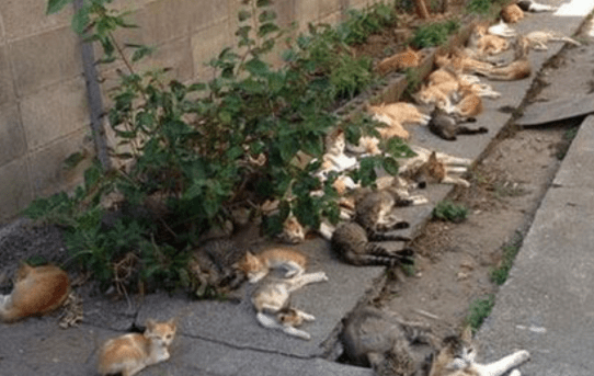 What happens when you grow catnip in your backyard…