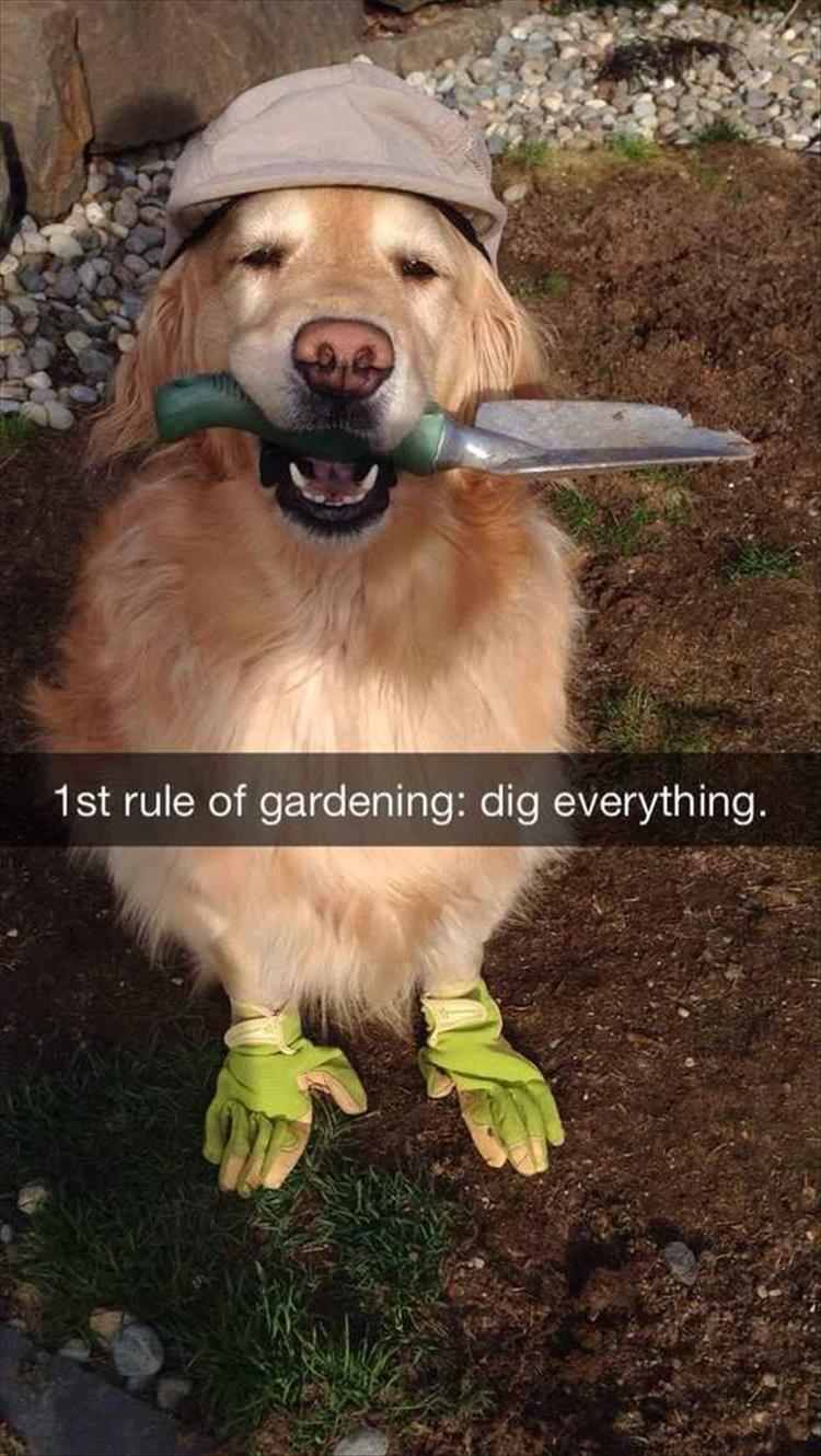1st rule of gardening: dig everything.