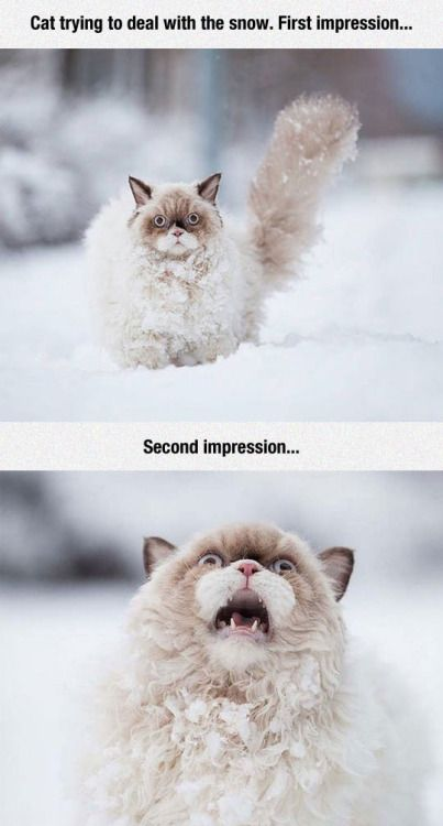 Cat trying to deal with the snow. First impression… Second impression…