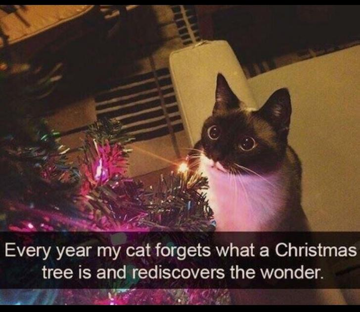 Every year my cat forgets what a Christmas tree is and rediscovers the wonder