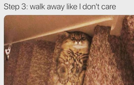 Step 1: make myself look like a step Step 2: have human trip over me and tumble down the stairs Step 3: walk away like I don't care