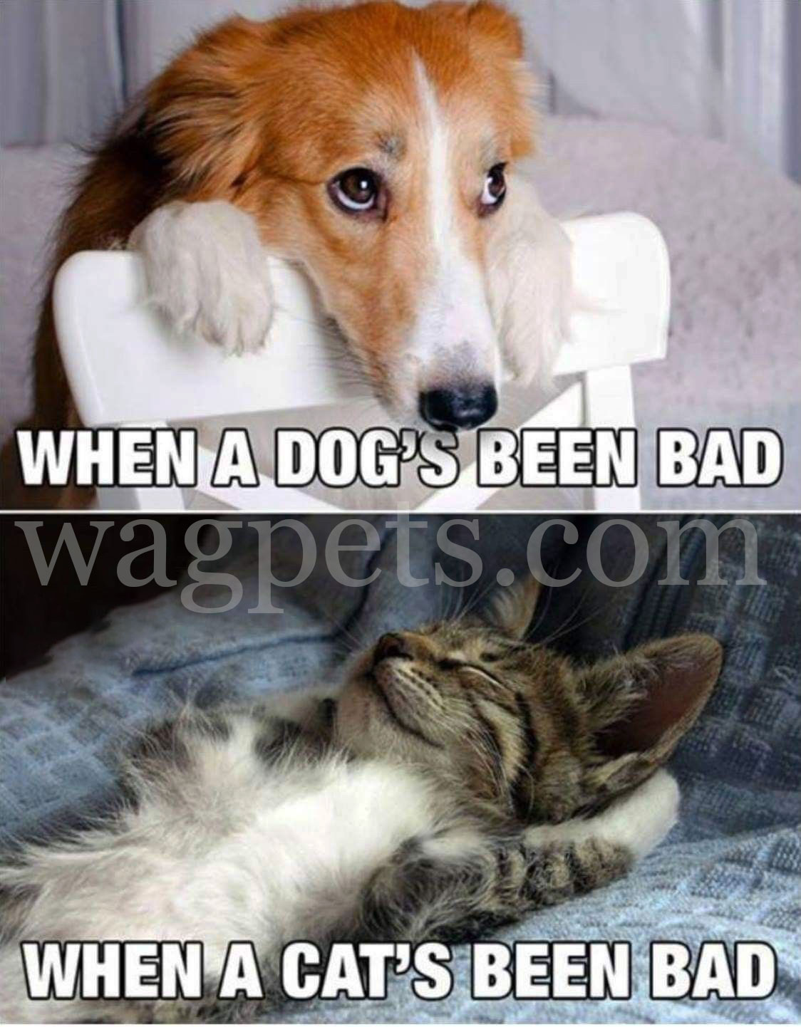 When a dog's been bed. When a cat's been bed.