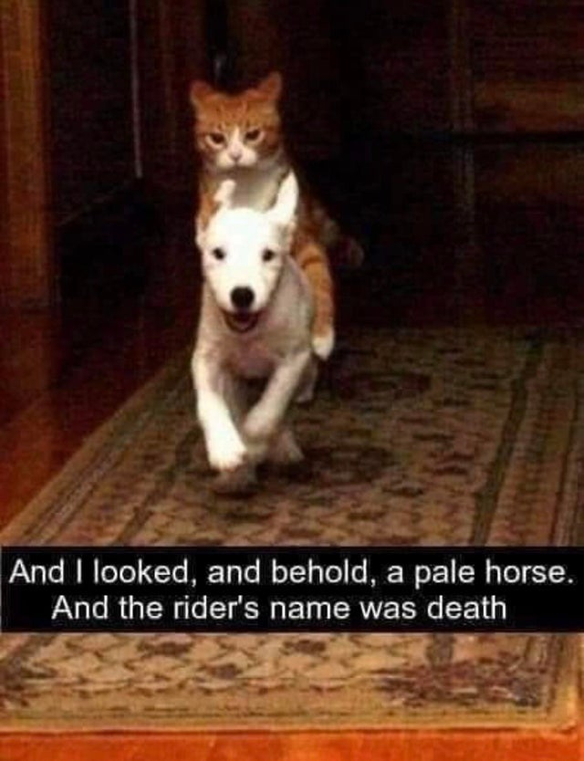 And I looked, and behold, a pale horse. And the rider's name was death.