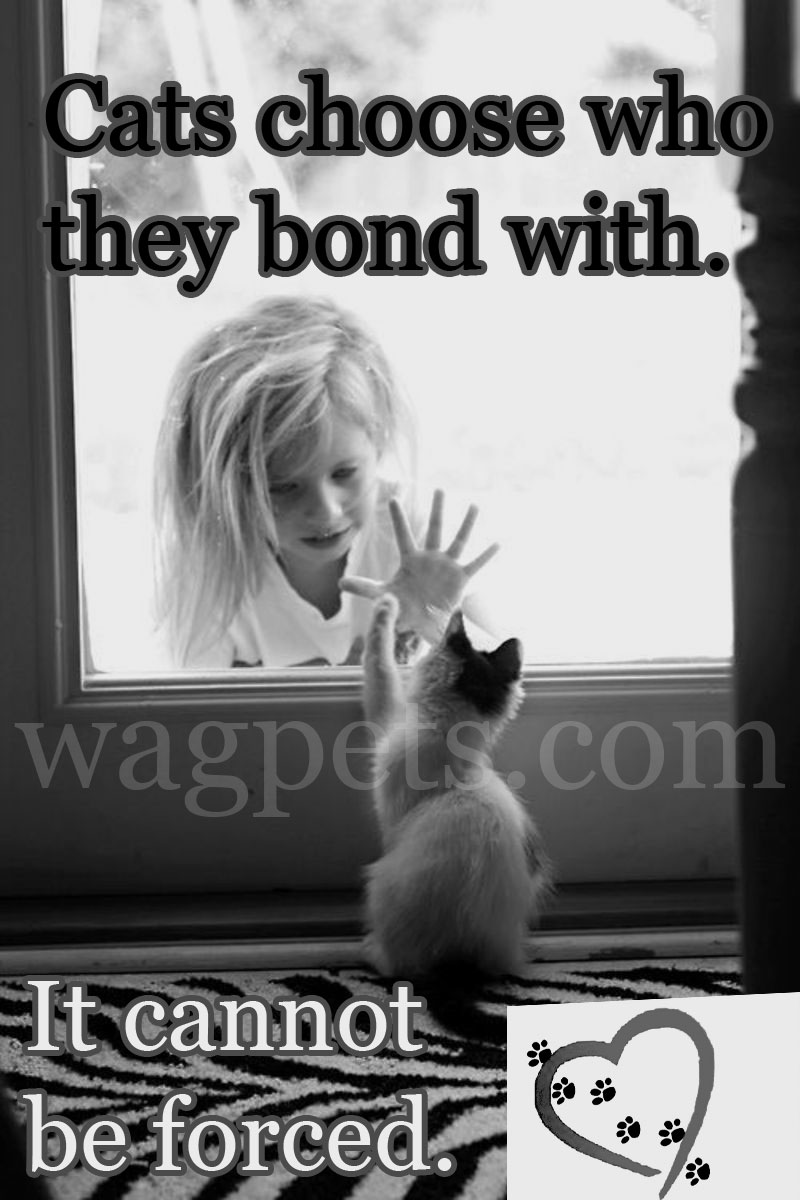 Cats choose who they bond with. It cannot be forced.
