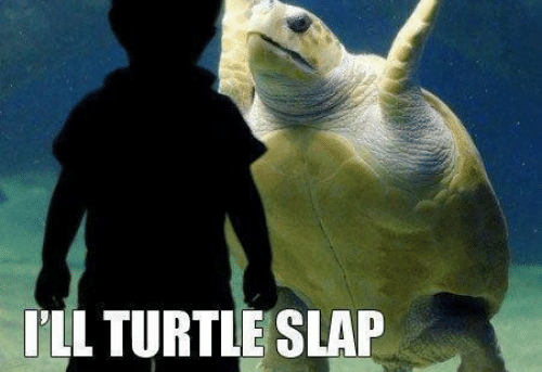 Come at me, bro! I'll turtle slap the shit out of you.