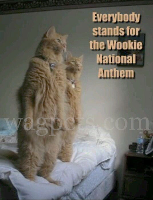 Everybody stands for the Wookie National Anthem