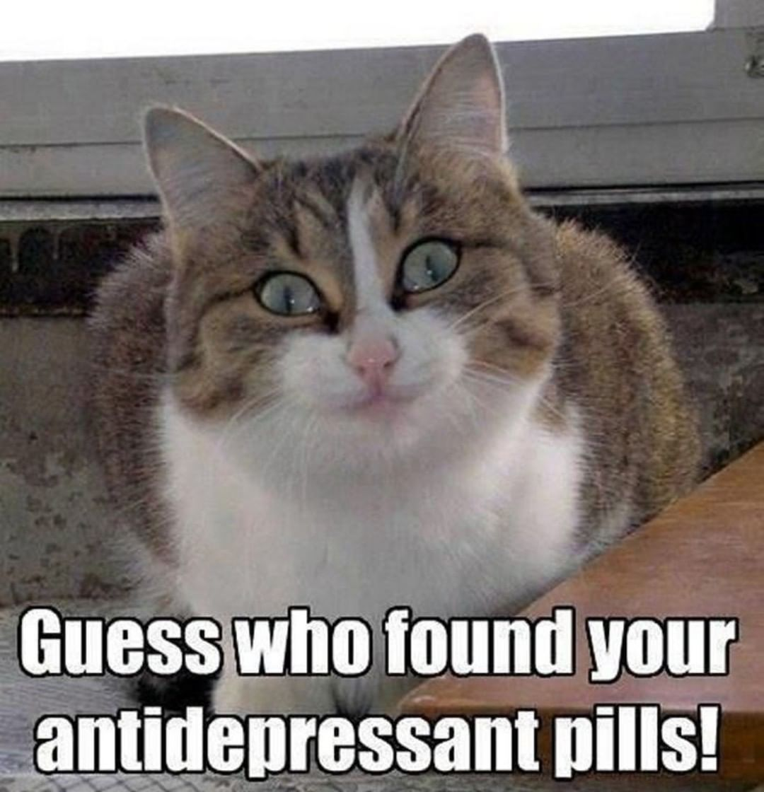 Guess who found your antidepressant pills!