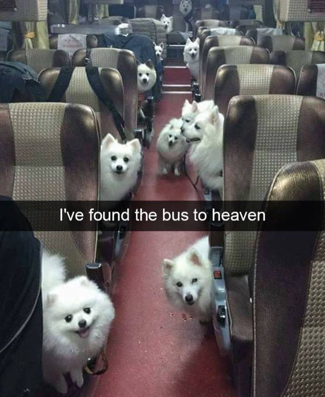 I've found the bus to heaven