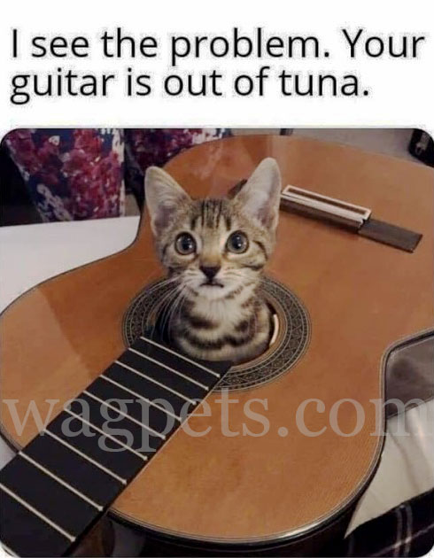 I see the problem. Your guitar is out of tuna.