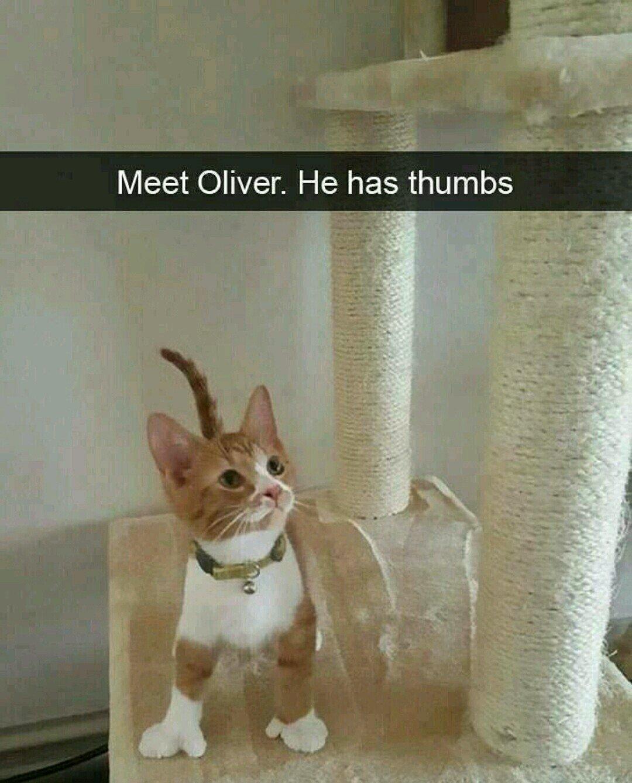 Meet Oliver. He has thumbs.