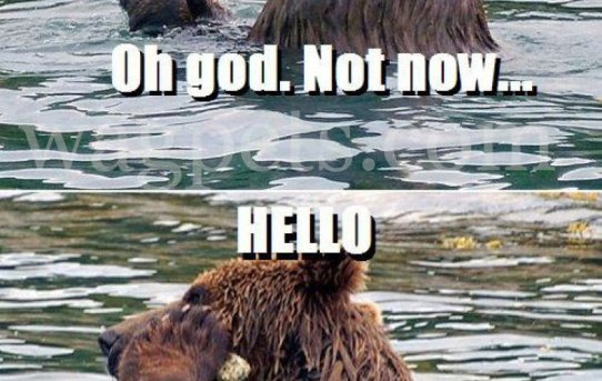 Oh god. Not now… Hello, this is Bear.