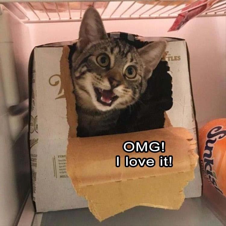 Omg! I love it!