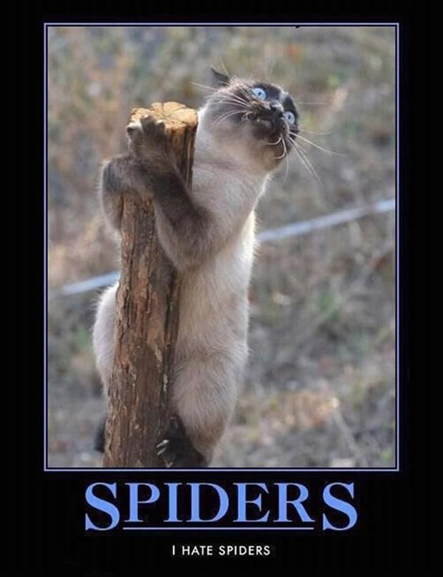 Spiders. I hate spiders.