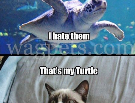There are plenty of fish in the sea. I hate them. That's my Turtle.