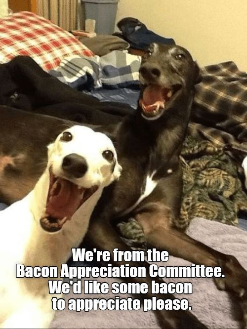 We're from Bacon Appreciation Committee. We'd like some bacon to appreciate please.