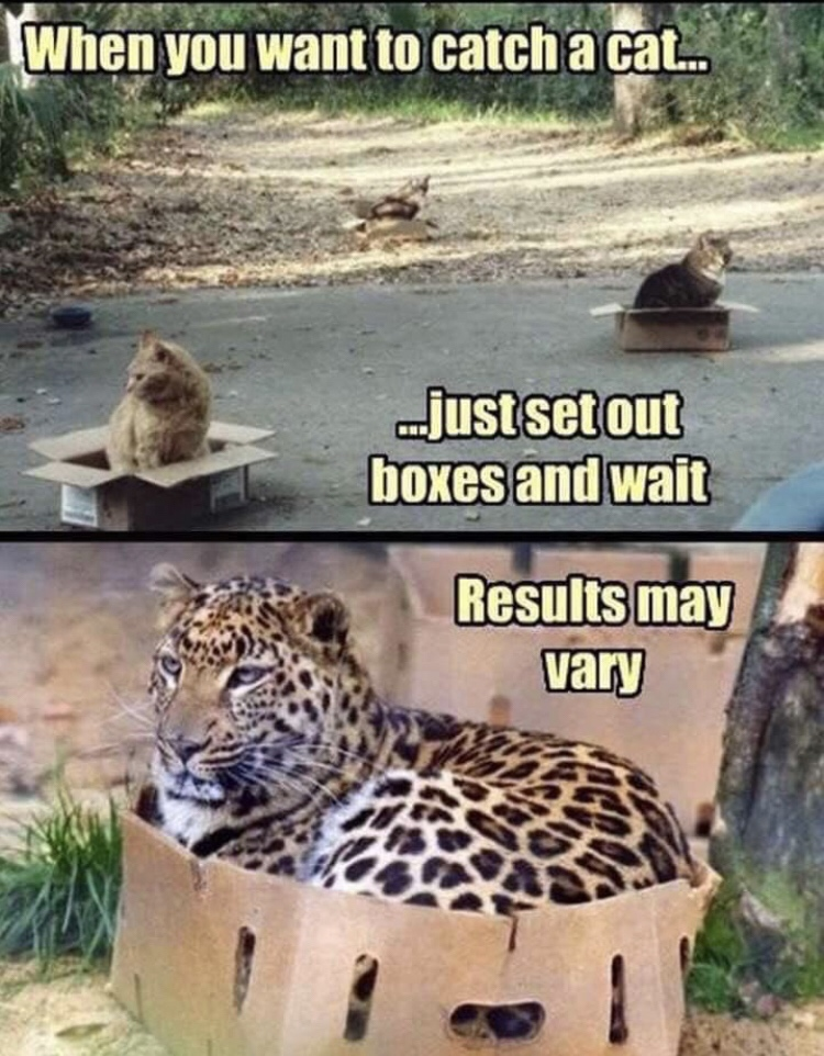 When you want to catch a cat… Just set out boxes and wait - Results may vary
