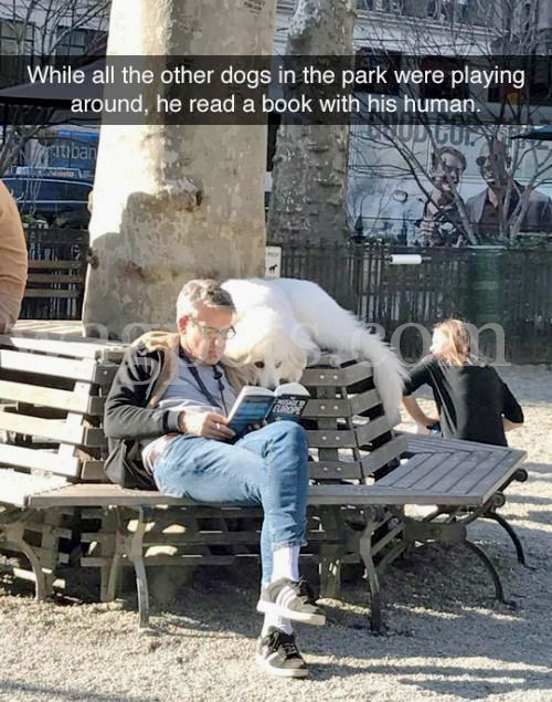 While all the other dogs in the park were playing around, he read a book with his human.