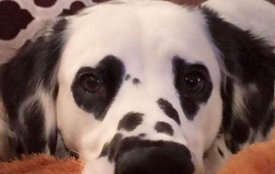 He has heart shaped spots on his eyes