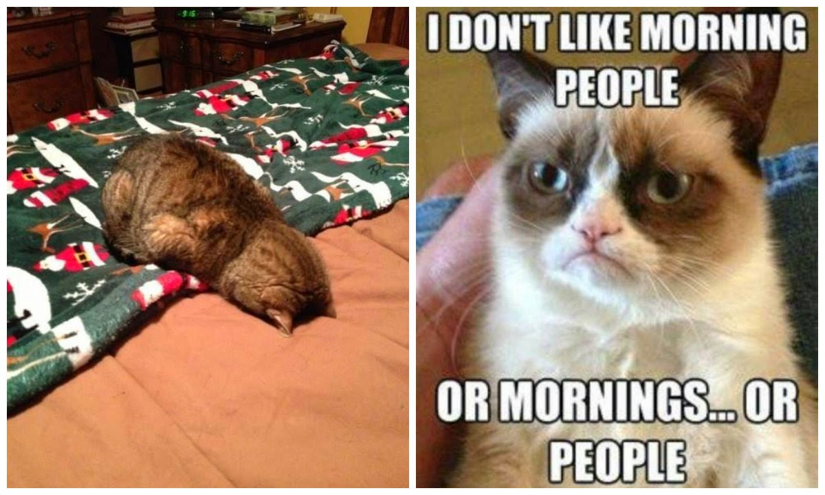 I don't like morning people or mornings… or people