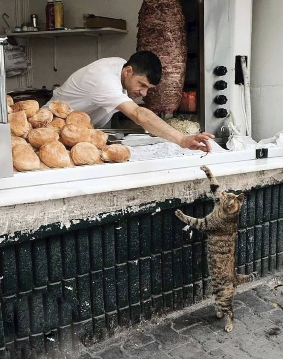 It is so kind to feed a hungry cat