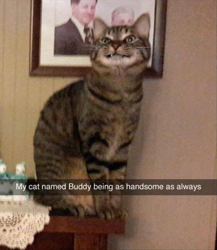 My cat named Buddy being as handsome as always