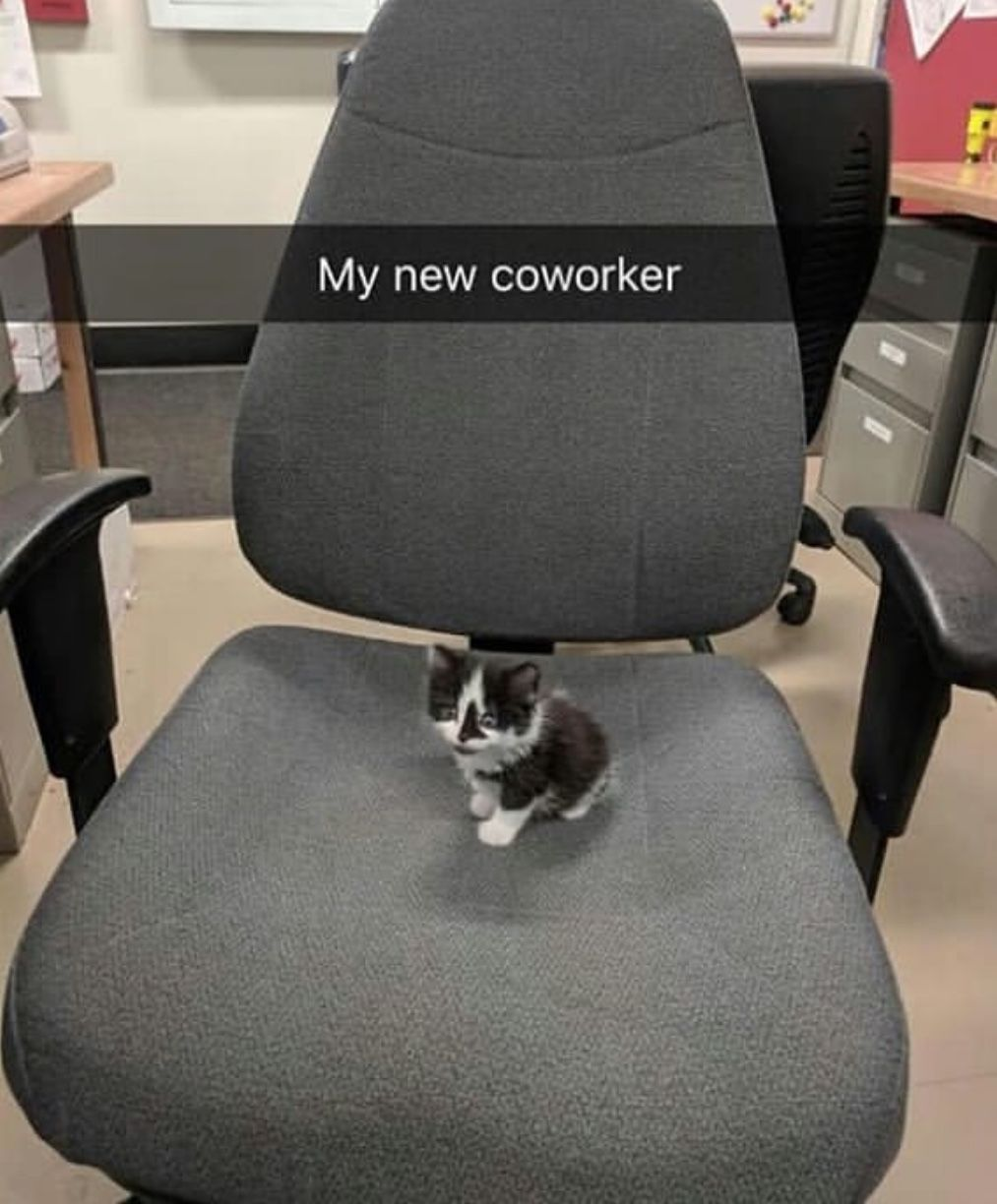 My new coworker