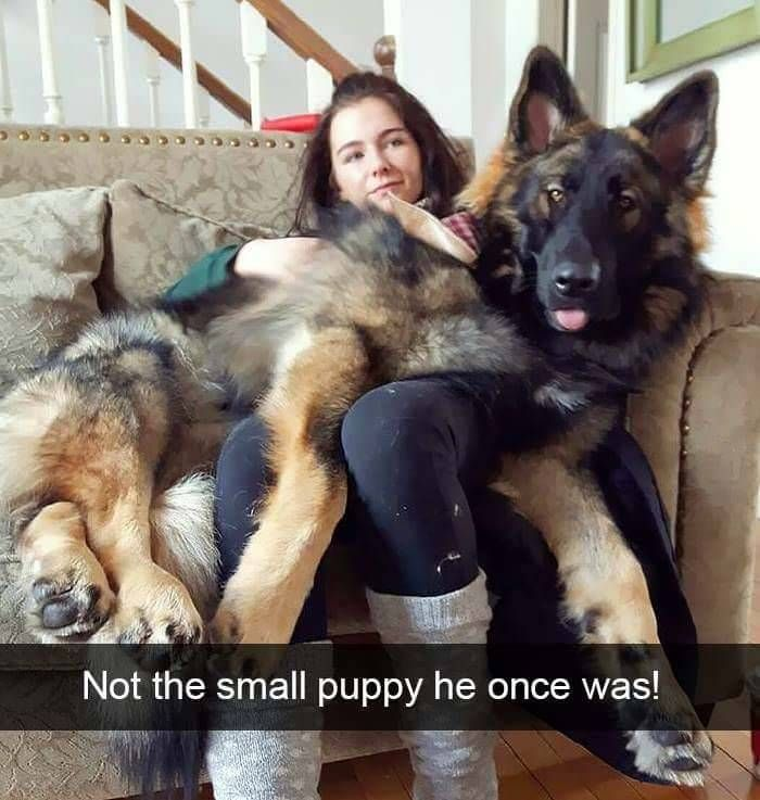Not the small puppy he once was!