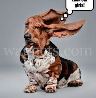 Sheldon heard that the 'windblown look' is 'in'… and updated his profile pic. Look out girls!