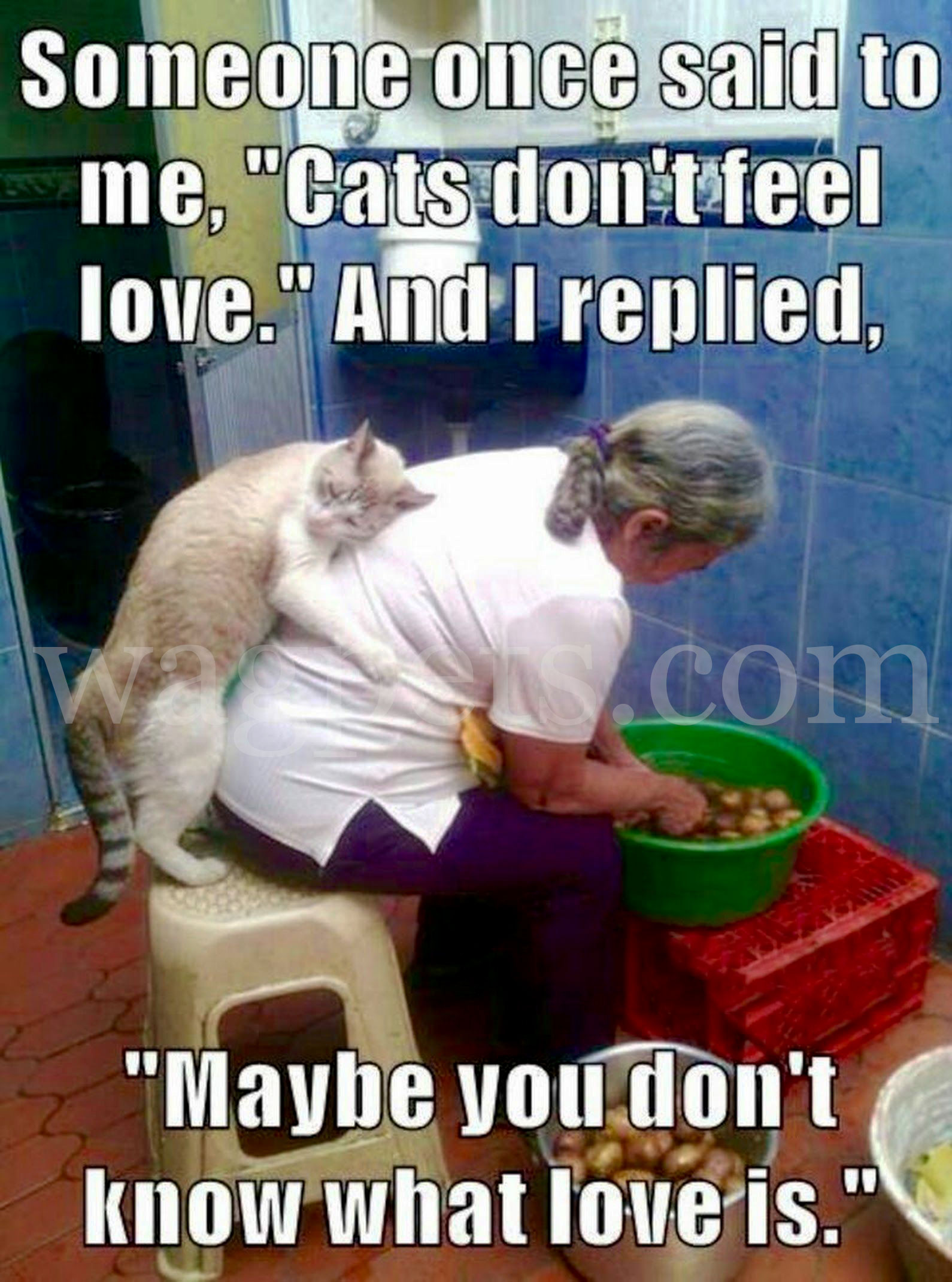 "Someone once said to me, ""Cats don't feel love."" And I replied, ""Maybe you don't know what love is."""