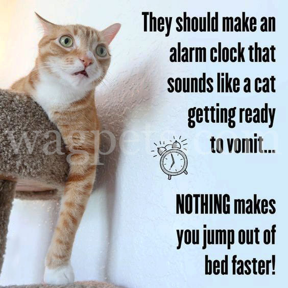 They should make an alarm clock that sounds like a cat getting ready to vomit… NOTHING makes you jump out of bed faster!