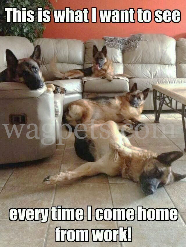 This is what I want to see every time I come home from work!