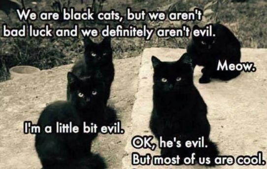 We are black cats, but we aren't bad luck and we definitely aren't evil. - Meow. - I'm a little bit evil. - OK, he's evil. But most of us are cool. I promise.
