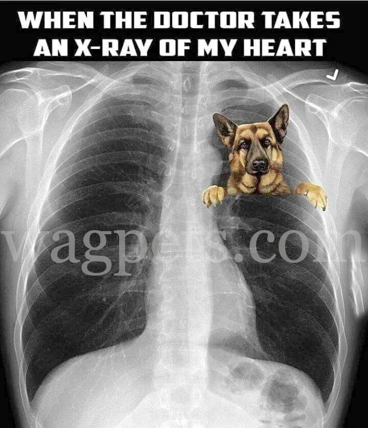 When the doctor takes an X-Ray of my heart