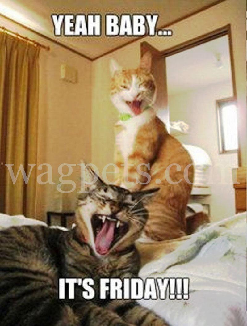 Yeah, baby… It's Friday!!!