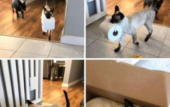 Even the cats are stocking up on toilet paper!