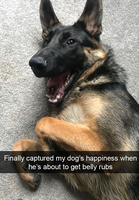 Finally captured my dog's happiness when he's about to get belly rubs