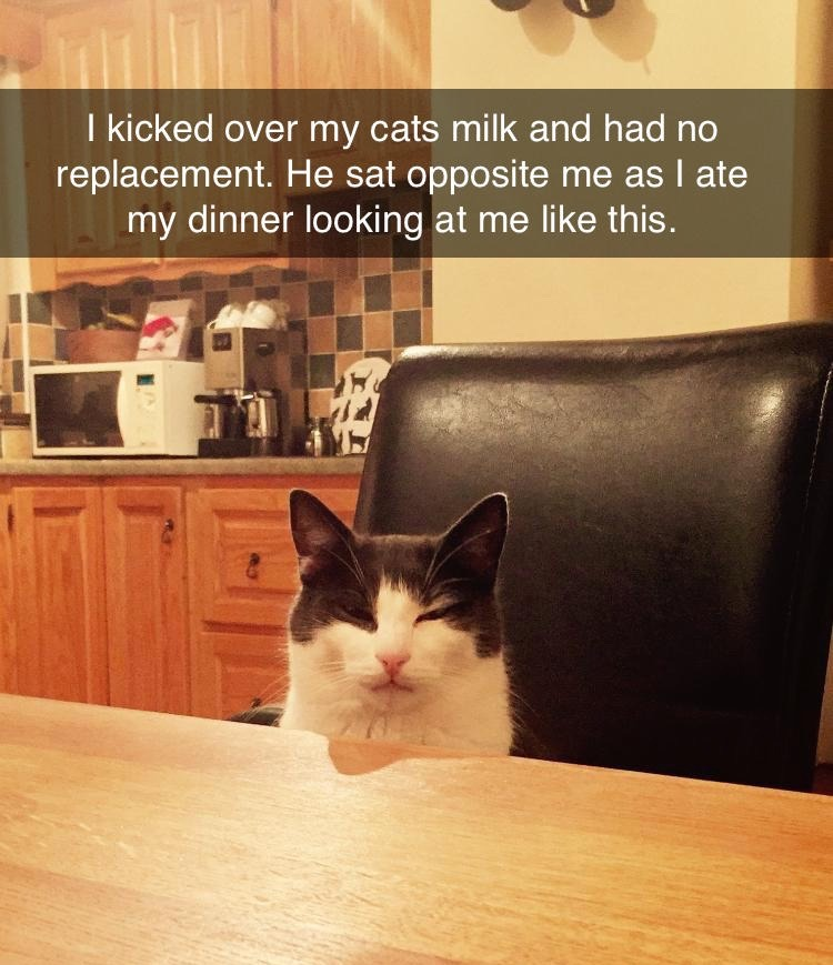 I kicked over my cats' milk and had no replacement. He sat opposite me as I ate my dinner looking at me like this.