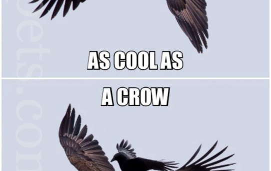 Maybe you are cool. But you will never be as cool as a crow riding an eagle.
