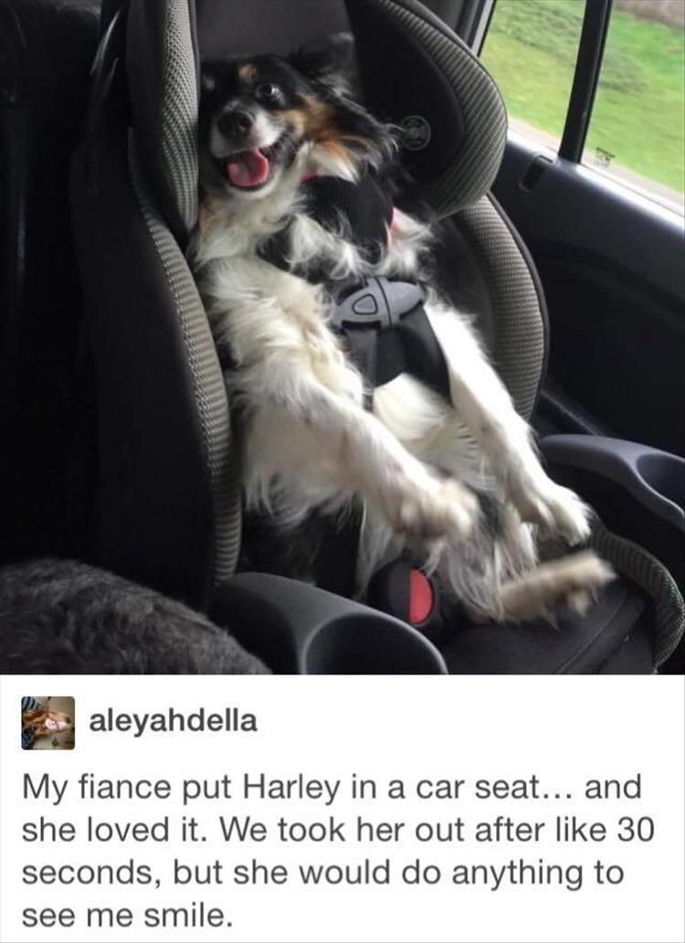 My fiancé put Harley in a car seat… and she loved it. We took her out after like 30 seconds, but she would do anything to see me smile.