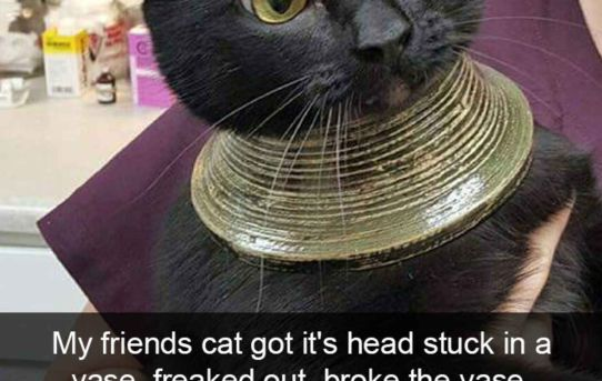 My friends cat got its head stuck in a vase, freaked out, broke the vase, and was left with this.