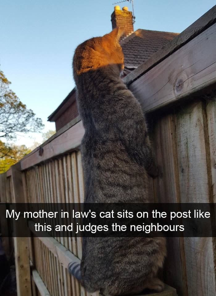 My mother in law's cat sits on the post like this and judges the neighbours