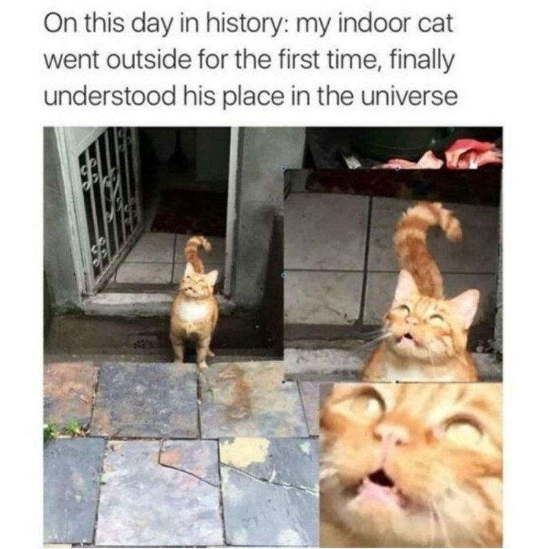 On this day in history: my indoor cat went outside for the first time, finally understood his place in the universe