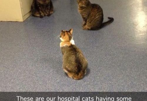 These are our hospital cats having some sort of meeting or something…