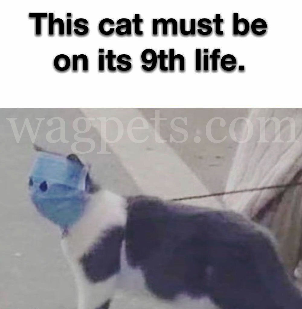 This cat must be on its 9th life.